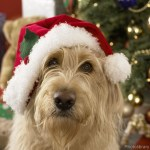 Perfect gift ideas for your little pooch