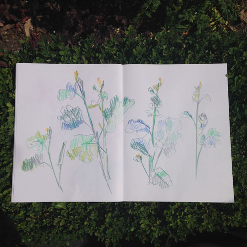 blue-flowers-melissa-doran