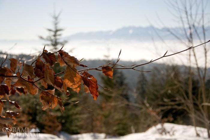 Jesienne akcenty w zimowej scenerii