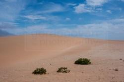 130116_wm_desert_tour_C45H2434