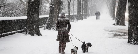 A woman takes her dogs out for a walk on 5th Ave. along Central Park during a snowstorm hit the New York City area, Friday Jan. 9, 2015. (Gordon Donovan/Yahoo News)