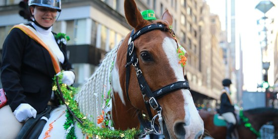 A horse from the Jamaica Bay Riding Academy is dressed for the day with a green hat for the St. Patrick's Day Parade, March 17, 2016, in New York. (Gordon Donovan/Yahoo News)