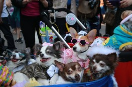 Easter Sunday was marked by the annual Bonnet Parade in midtown, filling Fifth Avenue with hundreds of colorful hats & costumes decorating adults, kids and pets on April 16, 2017. (Photo: Gordon Donovan/Yahoo News)