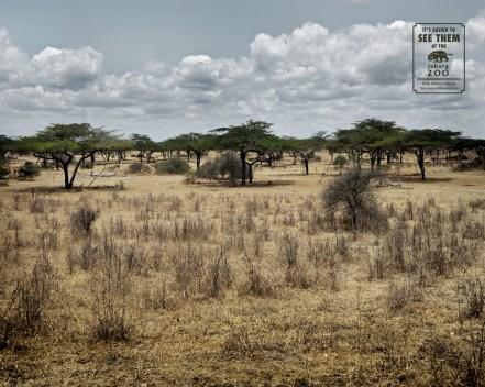Johannesburg Zoo: Bushveld