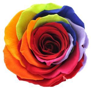 Rainbow roses order online,