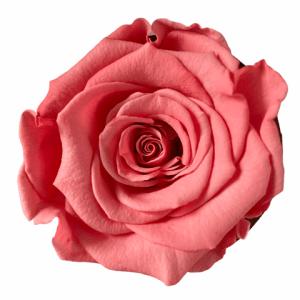 Beautiful roses order