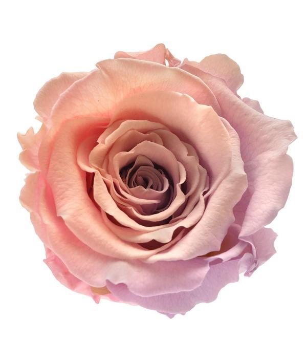 beautiful roses buy online