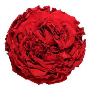 garden roses buy online