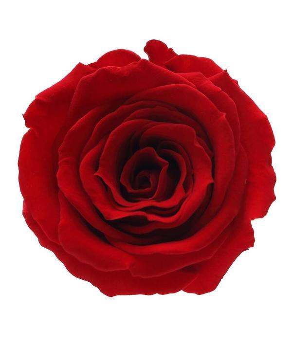 Buy roses in Brooklyn