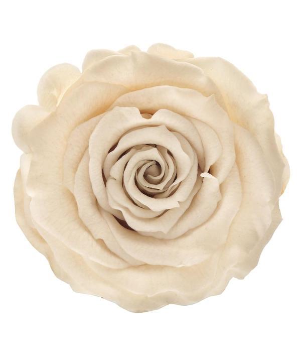 dry roses buy online