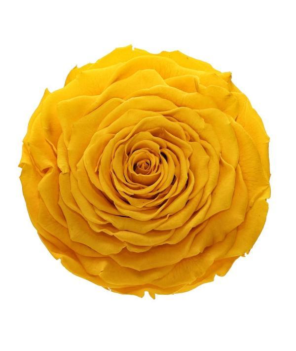Most popular roses
