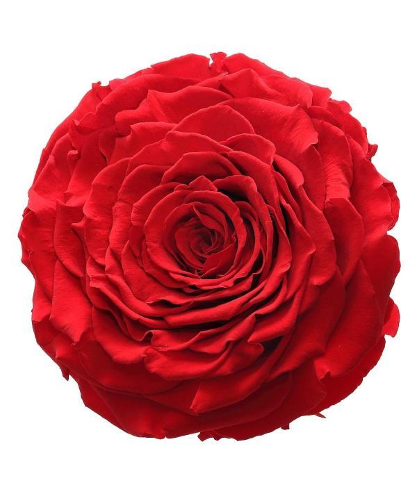 Large roses buy online