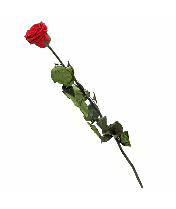 Extra long roses buy online