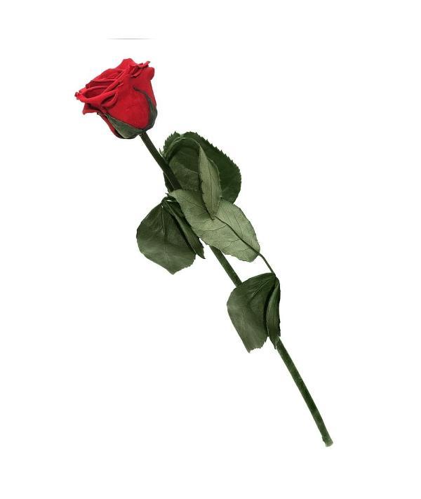 Single rose buy online