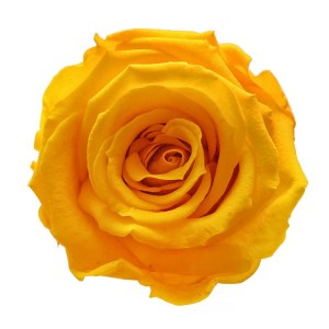 Yellow roses order online
