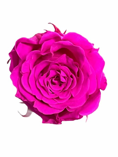 Hot pink infinity roses