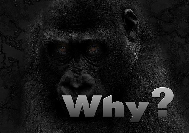 Why Are Gorillas Endangered - Gorilla Endangered Species