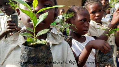 Photo of Sud-Kivu: La Chefferie de kabare adhère au projet présidentiel  : « Jardins scolaires pour 1 milliard d'arbres à l'horizon 2023 ».