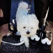 shoesdog