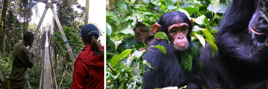 canopy walk and chimp trekking