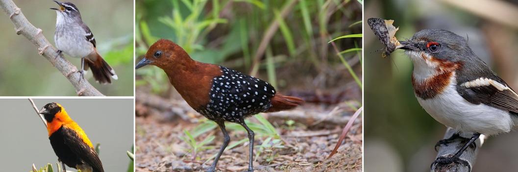 birding kibale
