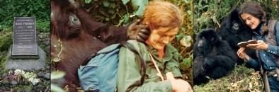 6 days Volcanoes gorilla safari Rwanda and chimp trekking tour in Nyungwe forest national park