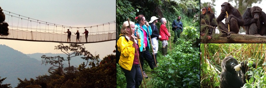 nyungwe-forest-tour