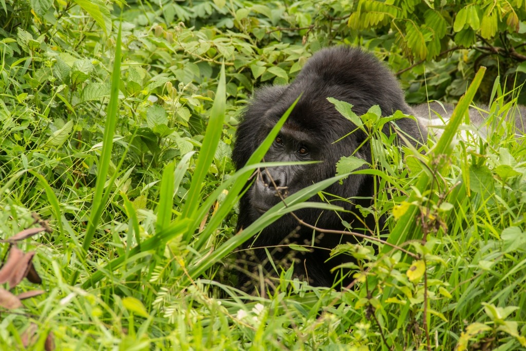 10-days-rwanda-gorilla-wildlife-and-cultural-safari