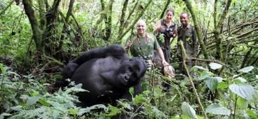 4 days Rwanda gorilla trekking safari volcanoes national park