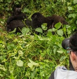 10 days Rwanda gorilla safari & wildlife tour Uganda