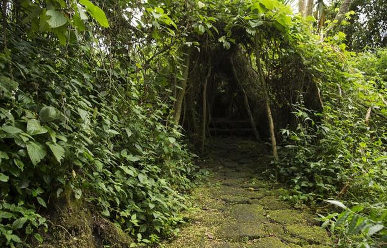 Buhanga Sacred Forest Nature Walks