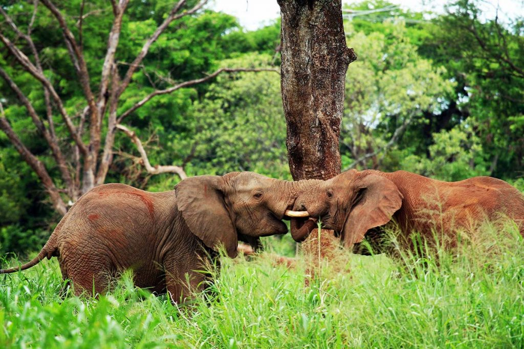 10 Days Uganda Wildlife Game Viewing Safari