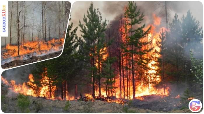 Постоянный мониторинг лесных пожаров помогает оперативно локализовать возгорания в Свердловской области