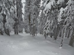 Powdery trees