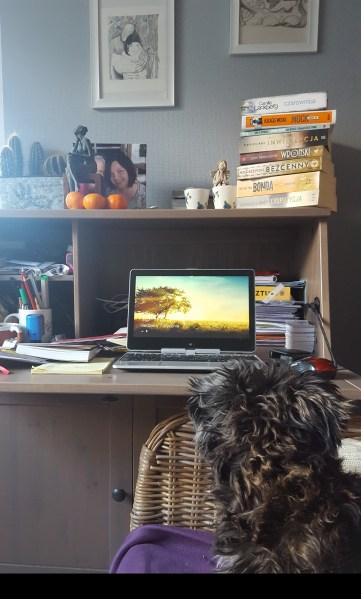 moje miejsce pracy i jego strażniczka