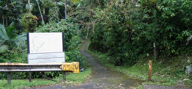 Bano de Oro Trail – El Yunque