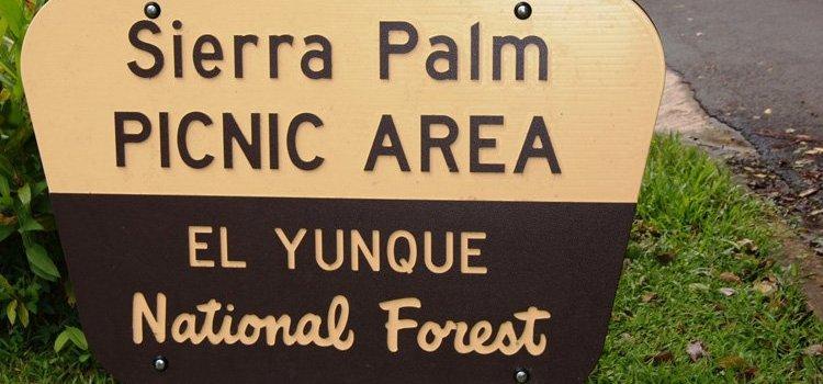 Sierra Palm Picnic Area – El Yunque