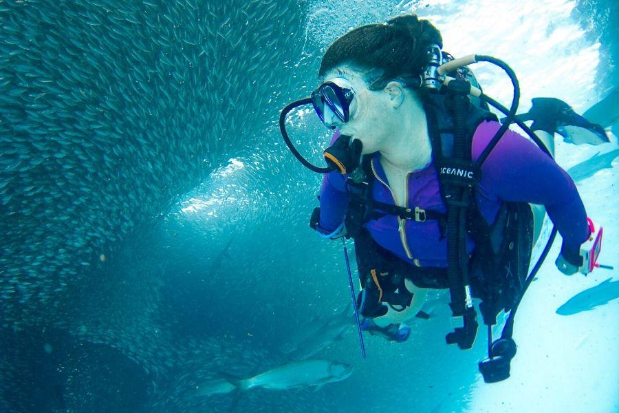A Woman Diving Near A Sardine School. Guide to Diving in Zanzibar Where To Go. Gosheni Safaris