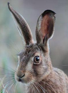 Norfolk wild file Norfolk wildlife trust david north and jemma walker