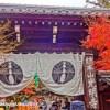 京都の光明寺の紅葉の時期に御朱印を頂いてきました!