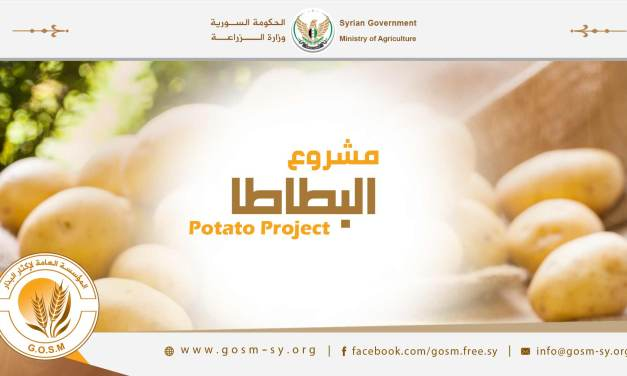 Continuation of the IPO on potato seeds