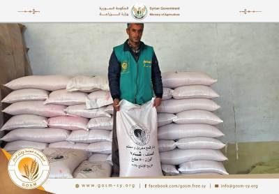 انتهاء توزيع القمح