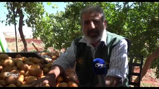 قناة أورينت إطلاق مشروع للبيوت الشبكية لزراعة البطاطا في حلب