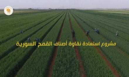 مشروع استعادة نقاوة أصناف القمح السورية