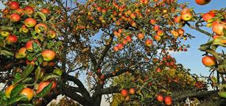 The Gospel is a Fruit-Bearing Tree