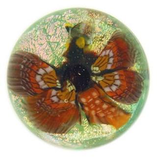 Butterflyondichro1