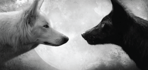The Tale of Two Wolves: 10 Seconds to Read, But the Life-Changing Lesson Lasts Forever