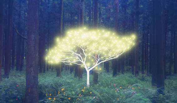 Trees Help Us Heal! This is How You Can Use Their Energy