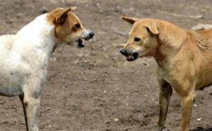 Напади од кучиња скитници во Гостивар и Жировница
