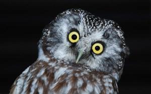 Зоологија – Неверојатни факти за животните